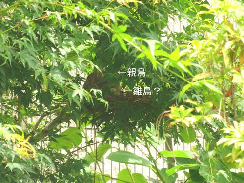 CIMG6700のコピー.jpg