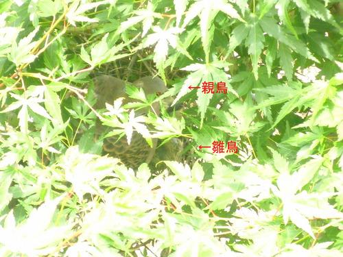 CIMG6718のコピー.jpg